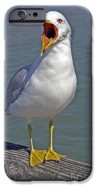 Photos Of Birds iPhone Cases - Beach Sounds iPhone Case by Skip Willits