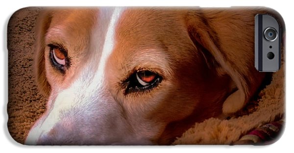 Beagles iPhone Cases - Beagle Blues iPhone Case by Karen Wiles