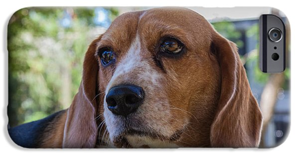 Puppies iPhone Cases - Beagle Dog iPhone Case by Craig Lapsley