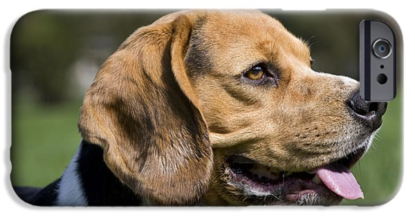 Dog Close-up iPhone Cases - Beagle iPhone Case by Johan De Meester