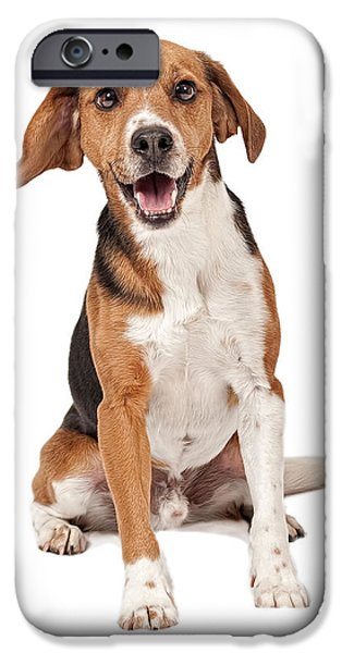 Beagles iPhone Cases - Beagle Mix Dog Isolated on White iPhone Case by Susan  Schmitz