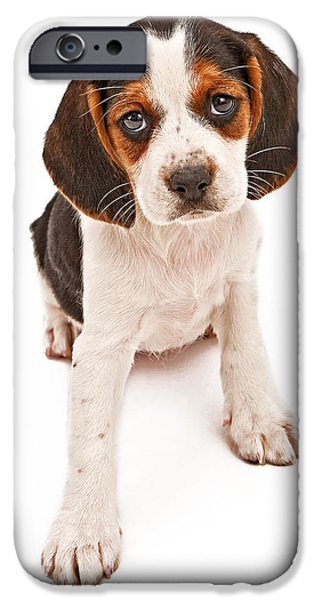 Mutt iPhone Cases - Beagle mix puppy with sad look iPhone Case by Susan  Schmitz