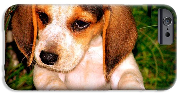 Canine Greeting Cards Digital Art iPhone Cases - Beagle Puppy 1 iPhone Case by Lynn Griffin