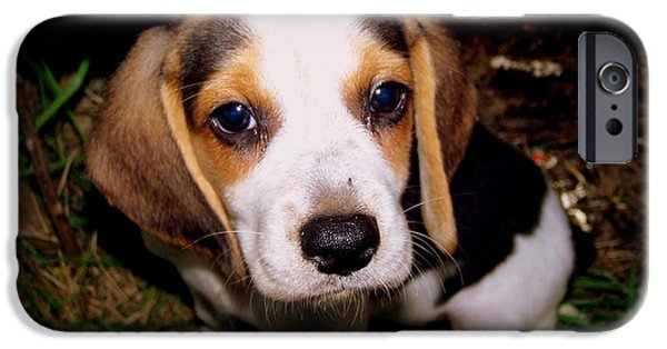 Canine Framed Prints Digital Art iPhone Cases - Beagle Puppy 2 iPhone Case by Lynn Griffin