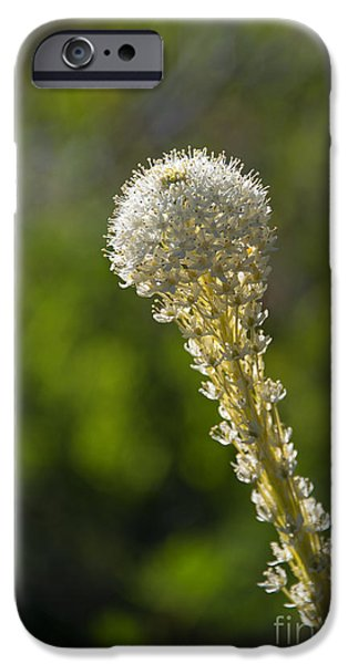 Basket iPhone Cases - Bear Grass Glow iPhone Case by Mike Dawson