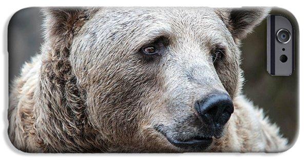 Kodiak iPhone Cases - Bear Necessities iPhone Case by Ray Warren