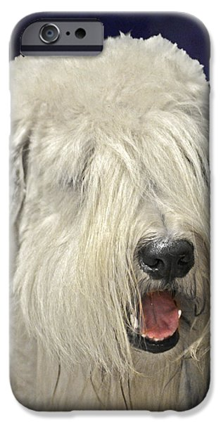 Working Breed iPhone Cases - Bearded Collie - the Bouncing Beardie iPhone Case by Christine Till