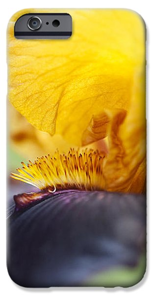 Bearded Iris Dwight Enys Abstract iPhone Case by Tim Gainey
