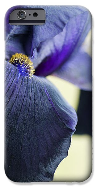 Bearded Iris Interpol iPhone Case by Tim Gainey