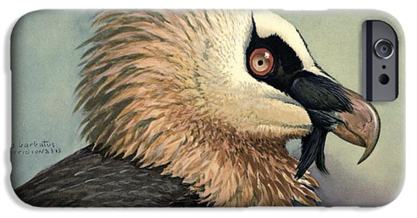 Beard iPhone Cases - Bearded Vulture iPhone Case by Louis Agassiz Fuertes