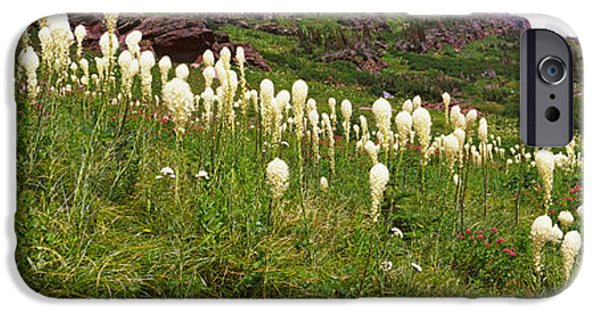 Park Scene iPhone Cases - Beargrass Xerophyllum Tenax iPhone Case by Panoramic Images