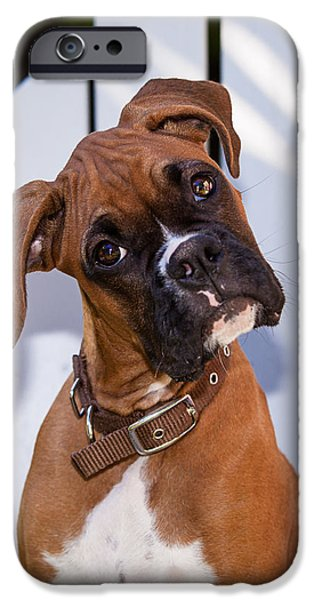 Boxer iPhone Cases - Beau the Boxer iPhone Case by Karen Zucal Varnas