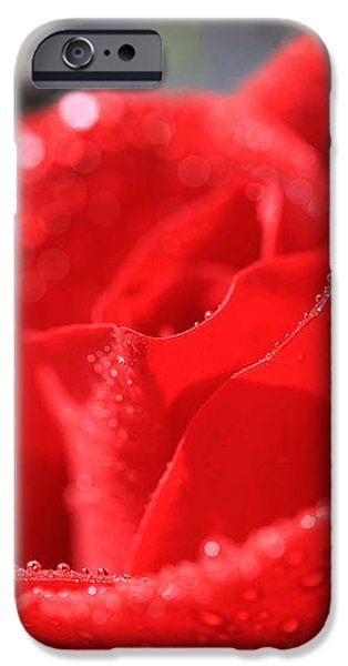 Beautiful as a Rose iPhone Case by Cheryl Young