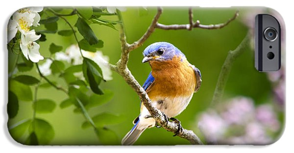 Bluebird iPhone Cases - Beautiful Bluebird iPhone Case by Christina Rollo