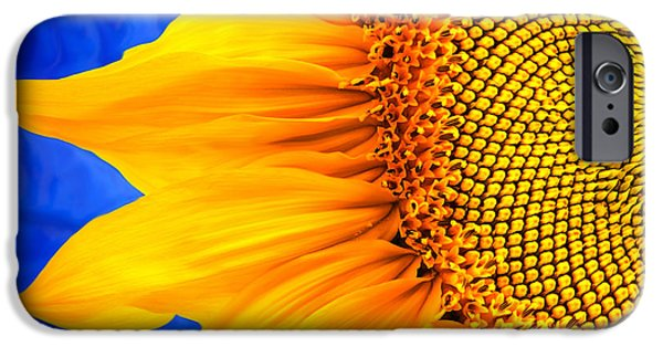 Rollo Digital Art iPhone Cases - Beautiful Bold Sunflower iPhone Case by Christina Rollo