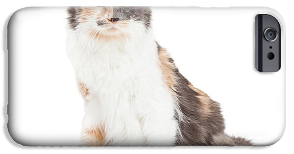 Animals Photographs iPhone Cases - Beautiful Calico Cat Sitting iPhone Case by Susan  Schmitz