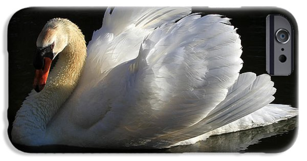 Swans... iPhone Cases - Beautiful Display iPhone Case by Donna Kennedy