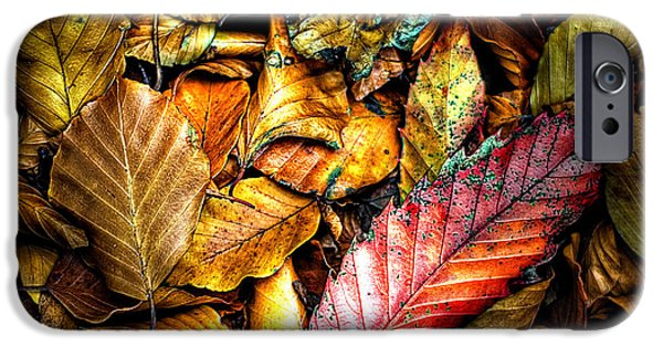 The Fall iPhone Cases - Beautiful Fall Color iPhone Case by Meirion Matthias