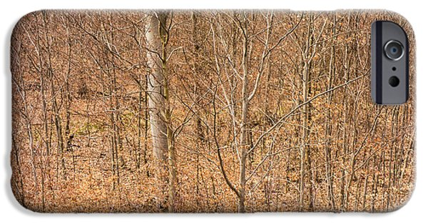 Subtle Colors iPhone Cases - Beautiful fine structure of trees brown and orange iPhone Case by Matthias Hauser