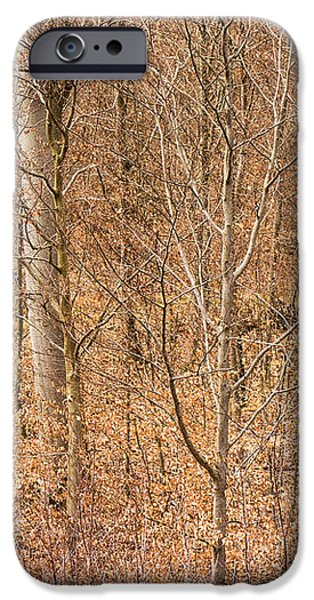 Beautiful fine structure of trees brown and orange iPhone Case by Matthias Hauser