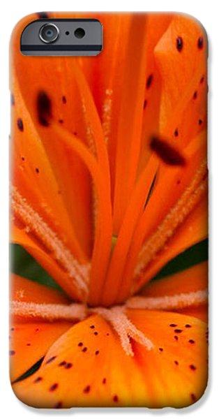 Beautiful lily iPhone Case by Carol Lynch