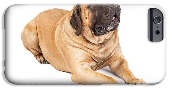 Working Breed iPhone Cases - Beautiful Mastiff Dog Laying iPhone Case by Susan  Schmitz