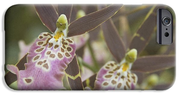 Cattleya iPhone Cases - Beautiful Mtssa. Shelob Tolkien - Orchids - Mericlone  iPhone Case by Sharon Mau
