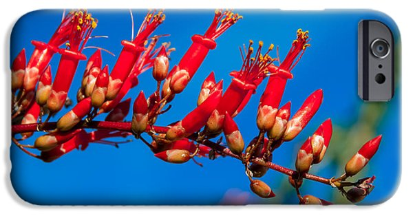 Haybale iPhone Cases - Beautiful Ocotillo iPhone Case by Robert Bales