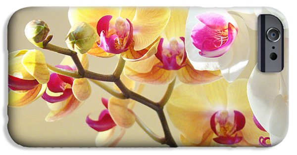Orchids Photographs iPhone Cases - Beautiful Orchids Floral art Prints Orchid Flowers iPhone Case by Baslee Troutman