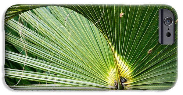 Tropics Pyrography iPhone Cases - Beautiful palm leaf iPhone Case by Michael Bennett