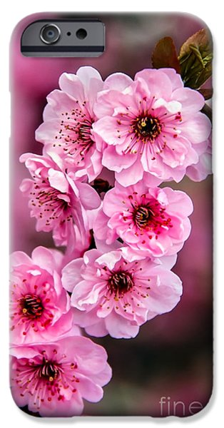 Fukushima iPhone Cases - Beautiful Pink Blossoms iPhone Case by Robert Bales