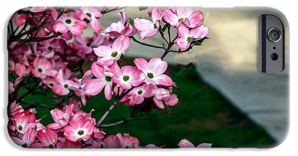 Haybale iPhone Cases - Beautiful Pink Dogwood iPhone Case by Robert Bales