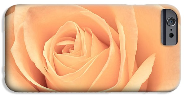 Rose iPhone Cases - Beautiful Pink Rose iPhone Case by Edward Fielding