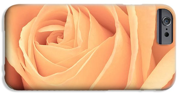 Rose iPhone Cases - Beautiful Pink Rose Panoramic iPhone Case by Edward Fielding