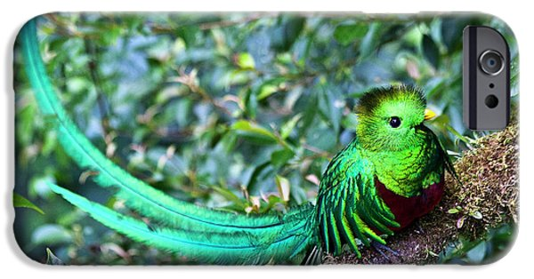 Fauna iPhone Cases - Beautiful Quetzal 3 iPhone Case by Heiko Koehrer-Wagner