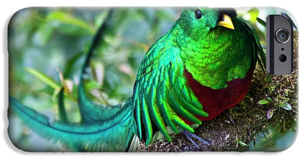 Fauna iPhone Cases - Beautiful Quetzal 4 iPhone Case by Heiko Koehrer-Wagner