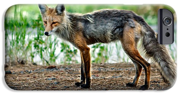 Bushy Tail iPhone Cases - Beautiful Red Fox iPhone Case by Robert Bales