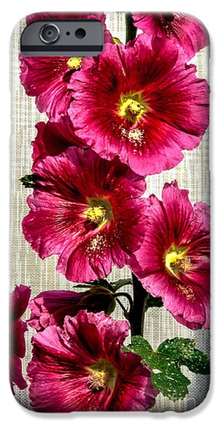Haybale iPhone Cases - Beautiful Red Hollyhock iPhone Case by Robert Bales
