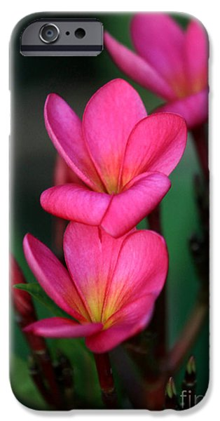 Florida Flowers Photographs iPhone Cases - Beautiful Red Plumeria iPhone Case by Sabrina L Ryan