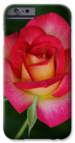 Beautiful Rose iPhone Case by Sandy Keeton