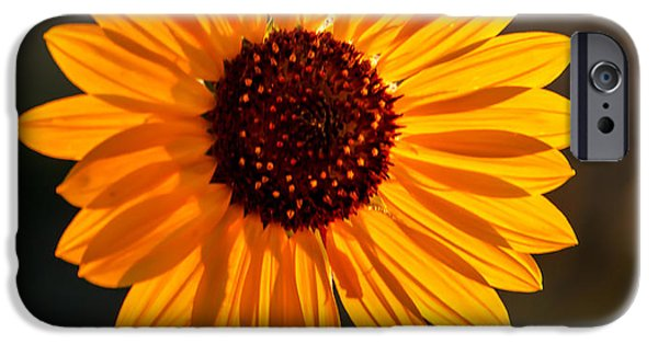 Haybale iPhone Cases - Beautiful Sunflower iPhone Case by Robert Bales