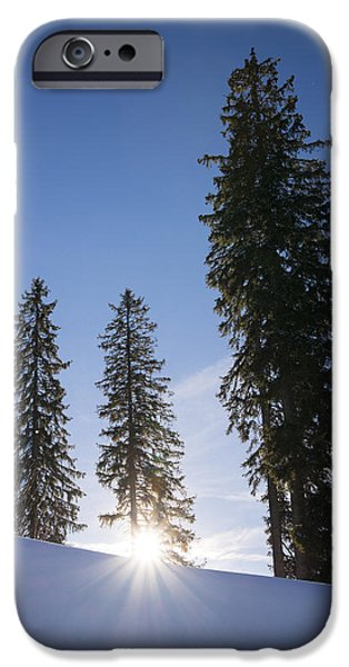 Snowy Day iPhone Cases - Beautiful trees on a sunny winter day iPhone Case by Matthias Hauser