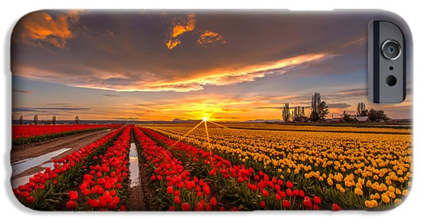 Tulips iPhone Cases - Beautiful Tulip Field Sunset iPhone Case by Mike Reid