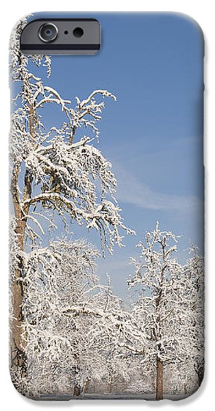 Beautiful winter day with snow covered trees and blue sky iPhone Case by Matthias Hauser