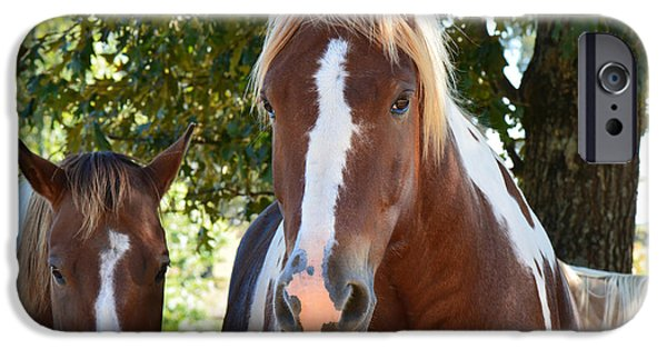 American Saddlebred Art iPhone Cases - Beauty and her best friend iPhone Case by Barbara Dalton