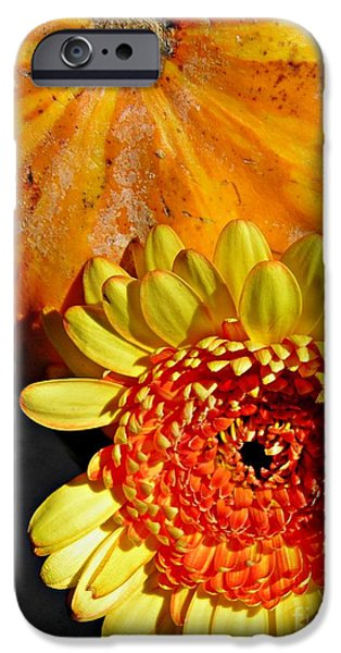 Beauty and the Squash 2 iPhone Case by Sarah Loft