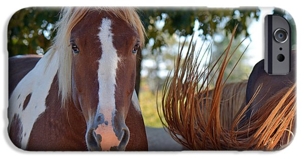 American Saddlebred Art iPhone Cases - Beauty and the Swish iPhone Case by Barbara Dalton