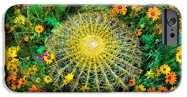 Cactus Southwest Cactus Flower Orange Wildflowers Nature Arizona iPhone Cases - Beauty Around Thorns iPhone Case by Jeanette Brown