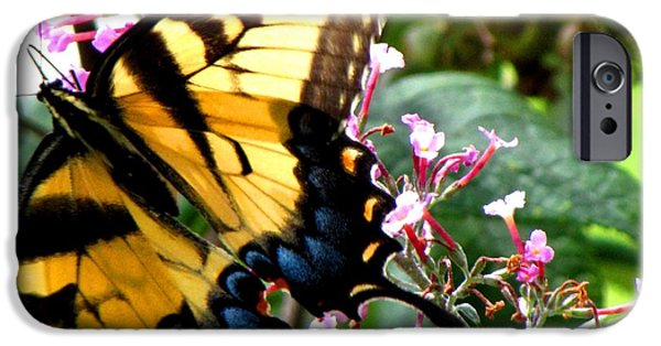 Plant iPhone Cases - Beauty Butterfly iPhone Case by Gardening Perfection