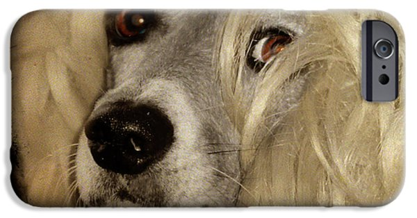 Puppy Digital Art iPhone Cases - Beauty iPhone Case by Gothicolors Donna Snyder